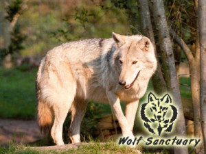 Garden Route Wolf Sanctuary