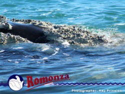 Whale Watching in Mossel Bay